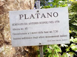 PlatanoScopoli_03